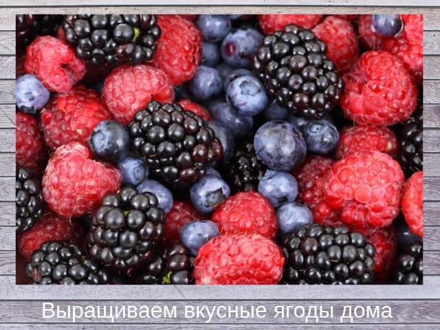 Выращиваем ягоды дома