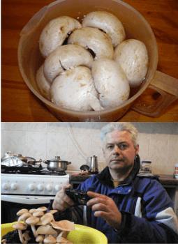 Отзывы на домашнюю грибницу для выращивания грибов