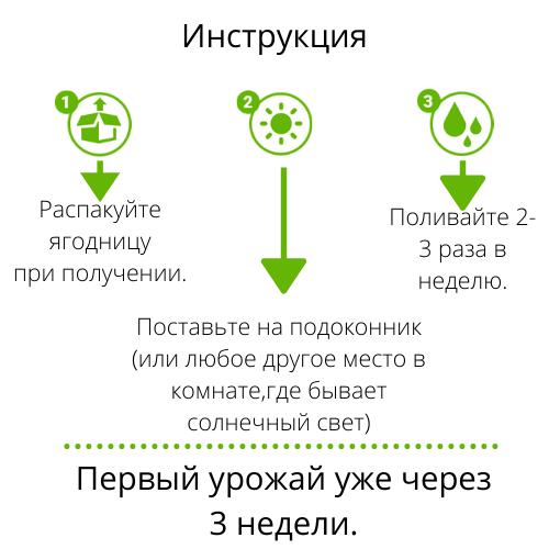 Инструкция применения Ягодного урожая черники